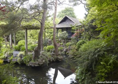Japanese Garden in Kildare